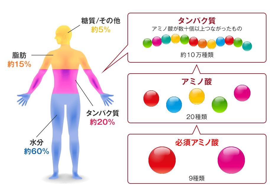 「アミノ酸」の画像検索結果